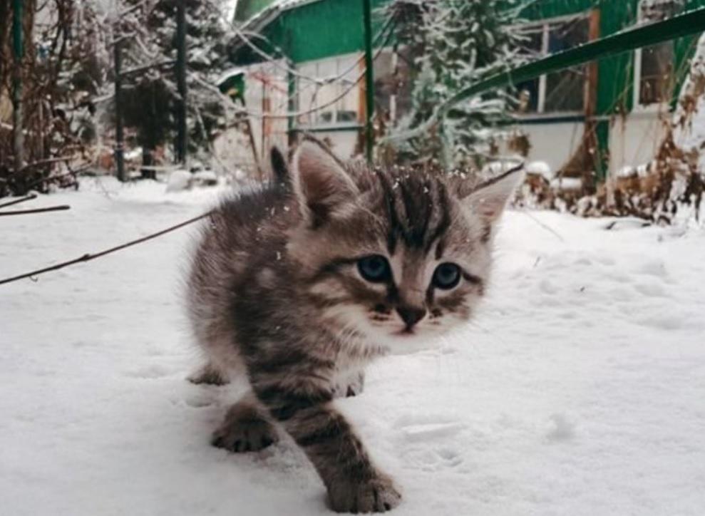 Девочка спасла кошку замерзающую в снегу и она не перестает ее благодарить!