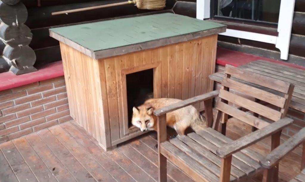 Возле будки сидел пес Дружок - а внутри будки расположилась лиса