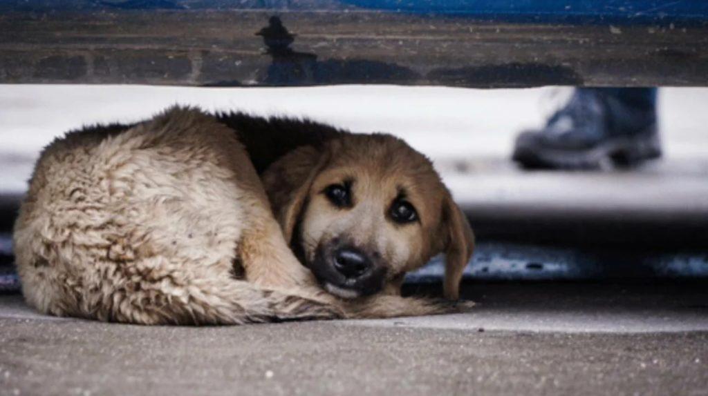 Бездомный пес нашел себе дом и семью