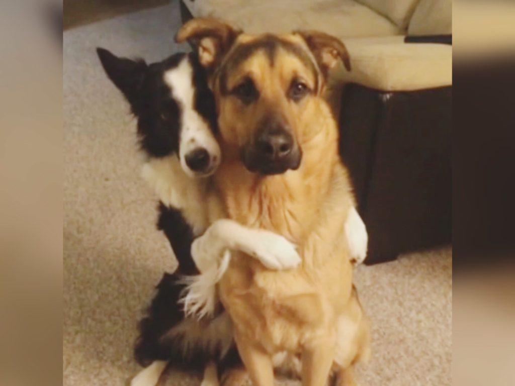 Мужчина  спас семью собак и приобрел преданных друзей