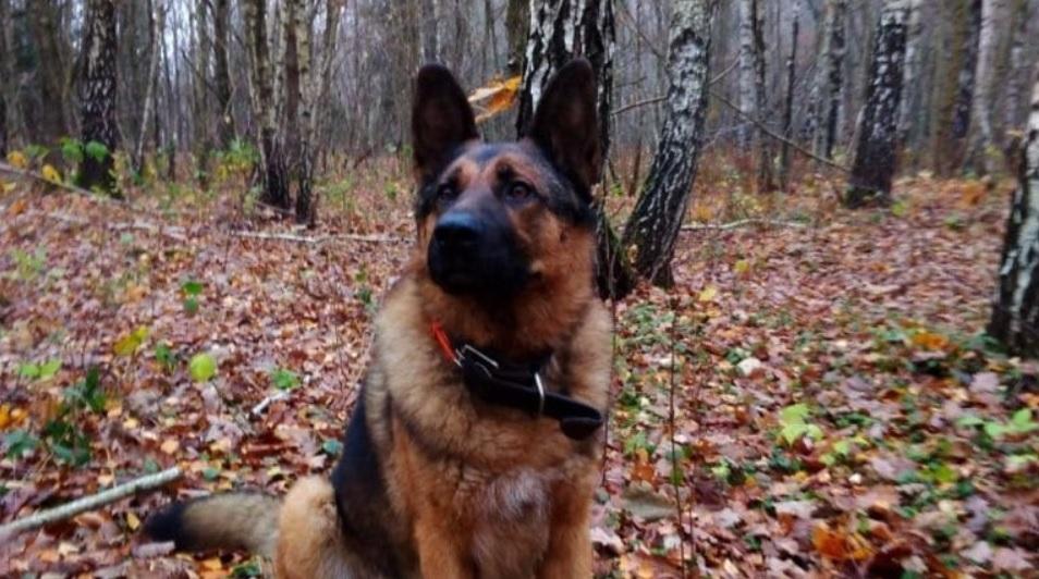 Больная и истощенная собака забрела на дачу к людям - семья не прогнала животное