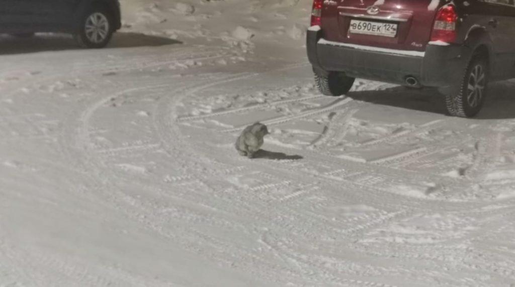 Кошечку выгнали на улицу в сильный мороз