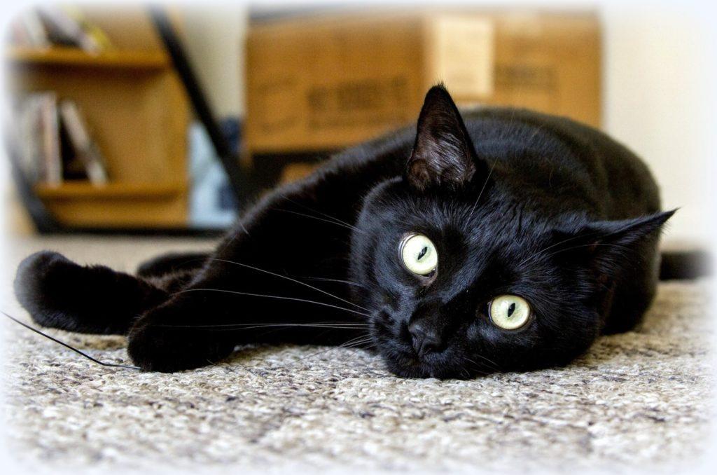 Благодаря доброму сердцу парня - маленький котенок остался живой