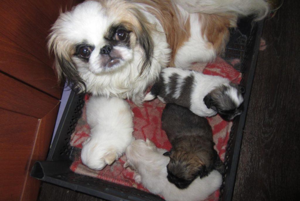 Беременная собачка нашла новую семью, благодаря случайным обстоятельствам