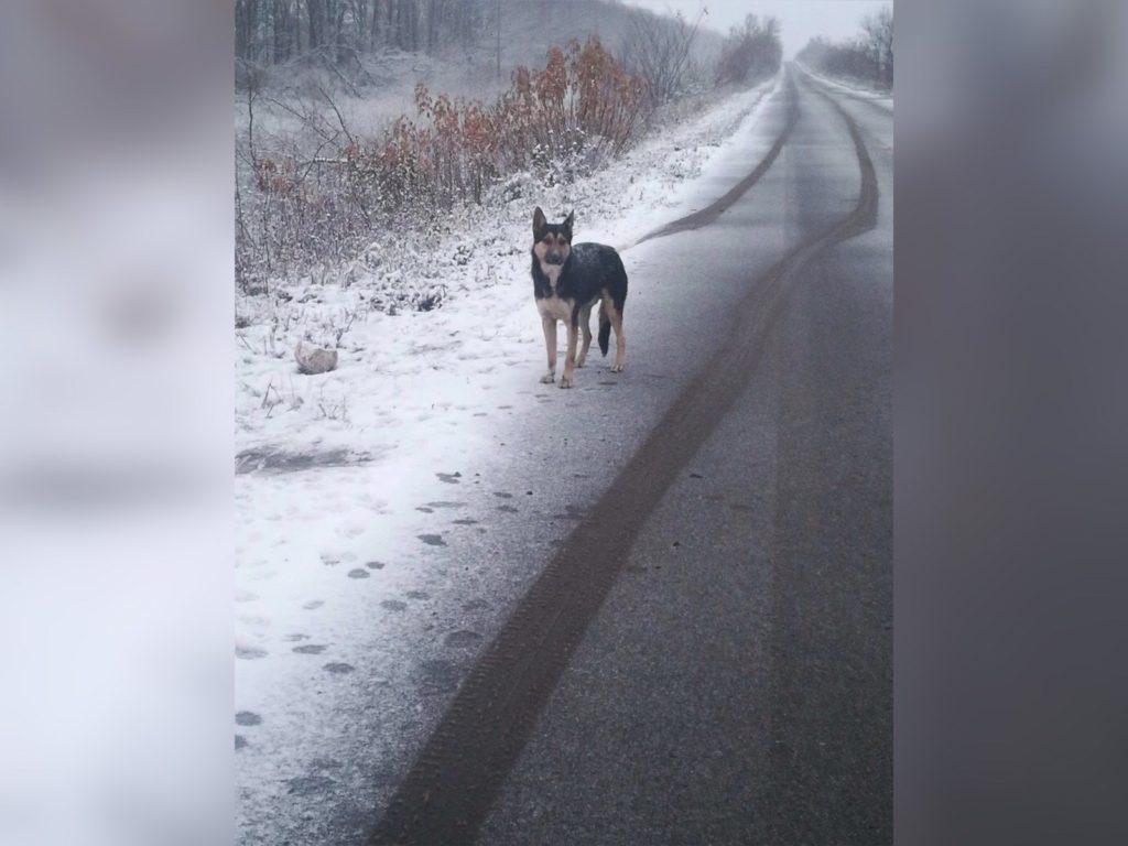 Брошенная на трассе собачка - смогла вновь поверить в доброту людей