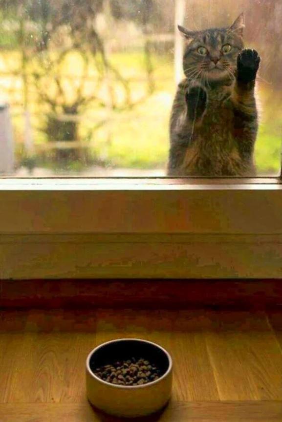 """""""Коты самые противоречивые создания в мире!"""" Смешные котики"""