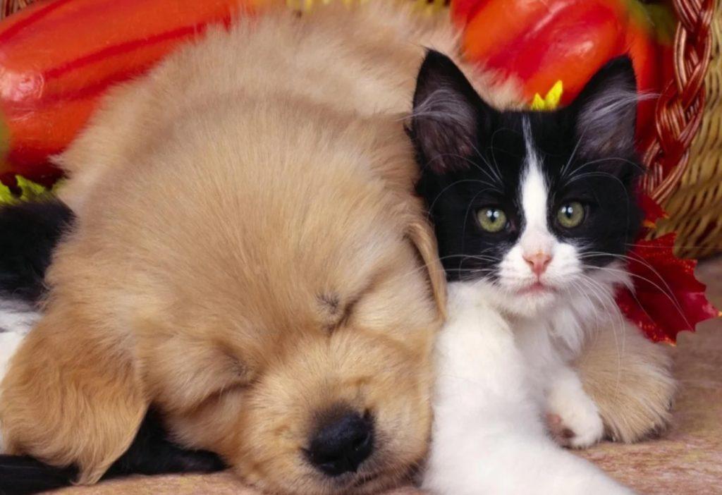 От щенка трижды отказались из-за того, что он ходил под себя, но ему повезло подружиться с котёнком по имени Ерошка