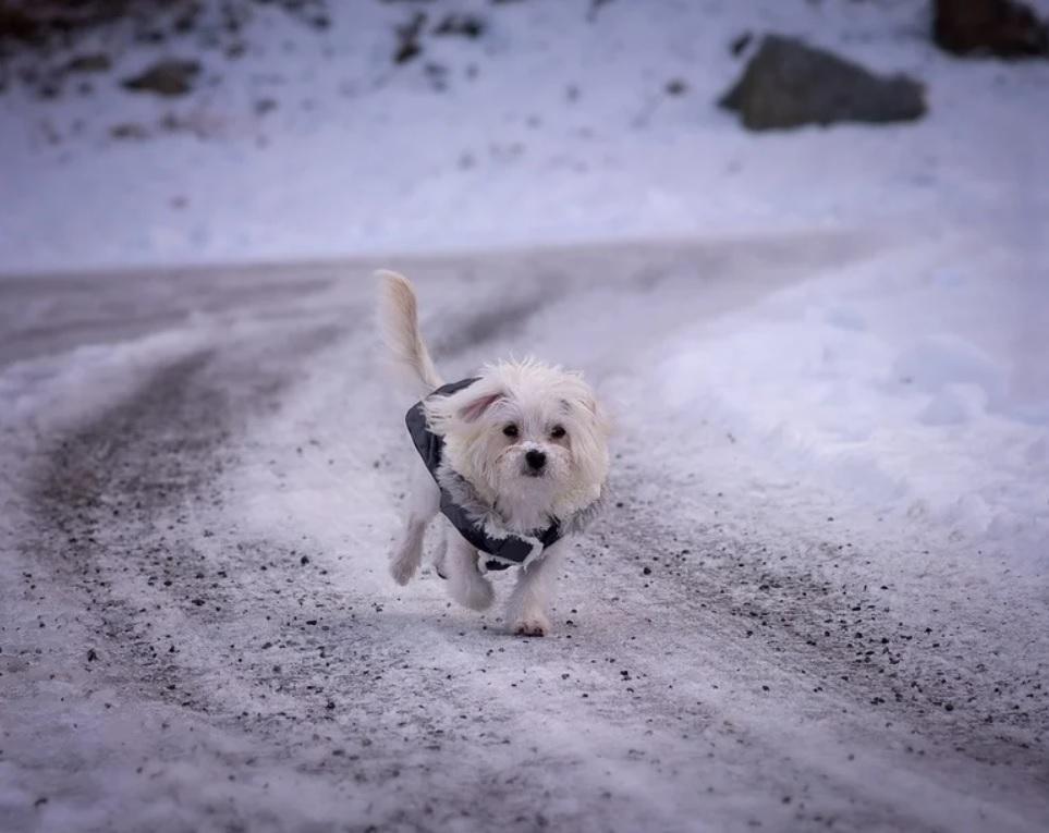 Блинчик бежал за машиной, стерая лапки - пёсику уже было нечего терять