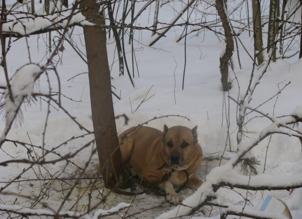 Хозяин привязал собаку к дереву в лесу и уехал - а она с грустью лежала под ним и ждала 😲