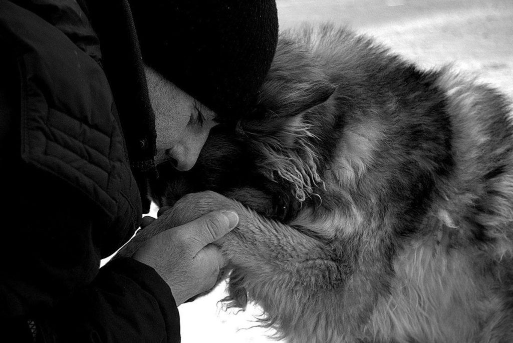 Верного пса на закате лет выгнали из дома