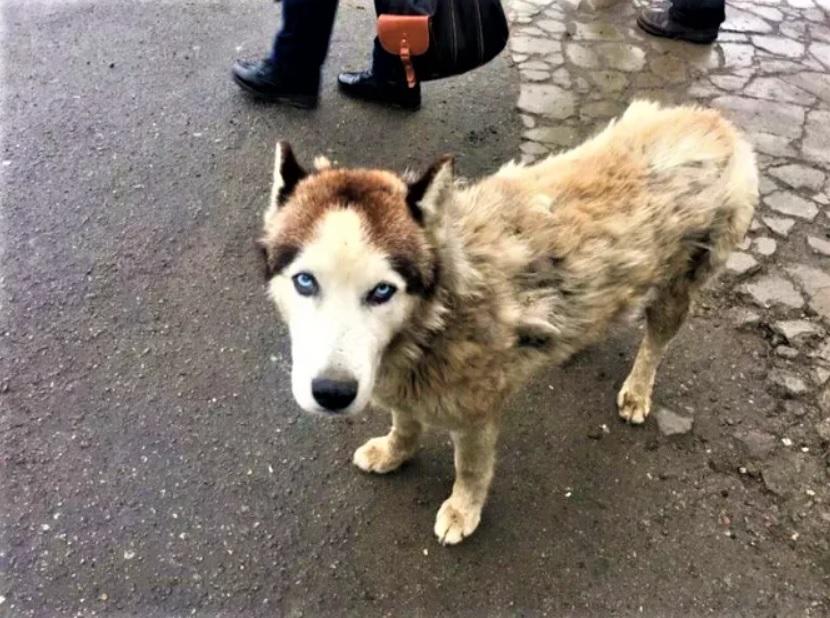 Щенок хаски жил возле мусорки и убегал от людей: Он полностью глухой и не понимает, что ему хотят помочь