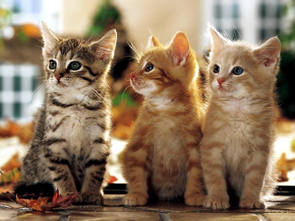 Мечта девушки завести котика сбылась в тройном размере