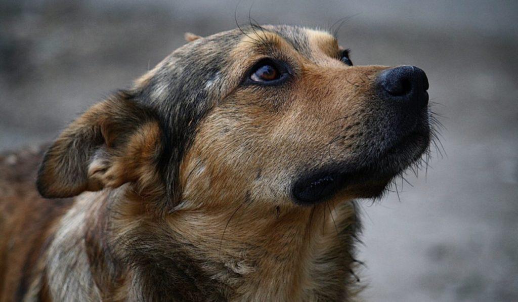 Бездомная собака стала на защиту женщины и спасла ее от грабителей