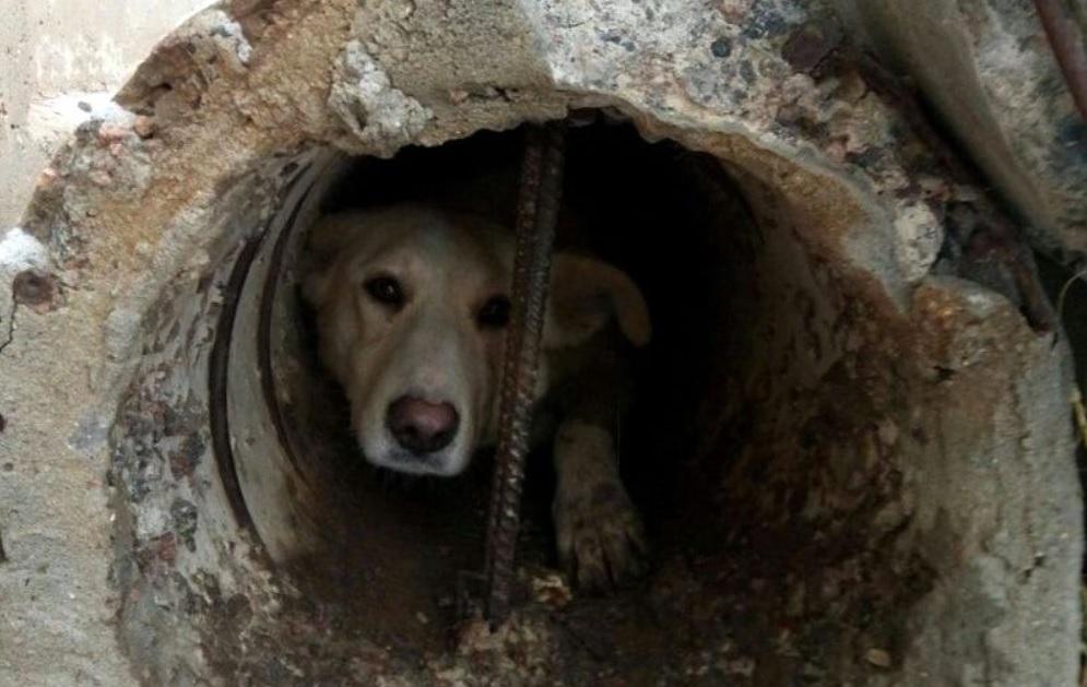 Они увидели из трубы грустные глазки песика - который нуждался в помощи