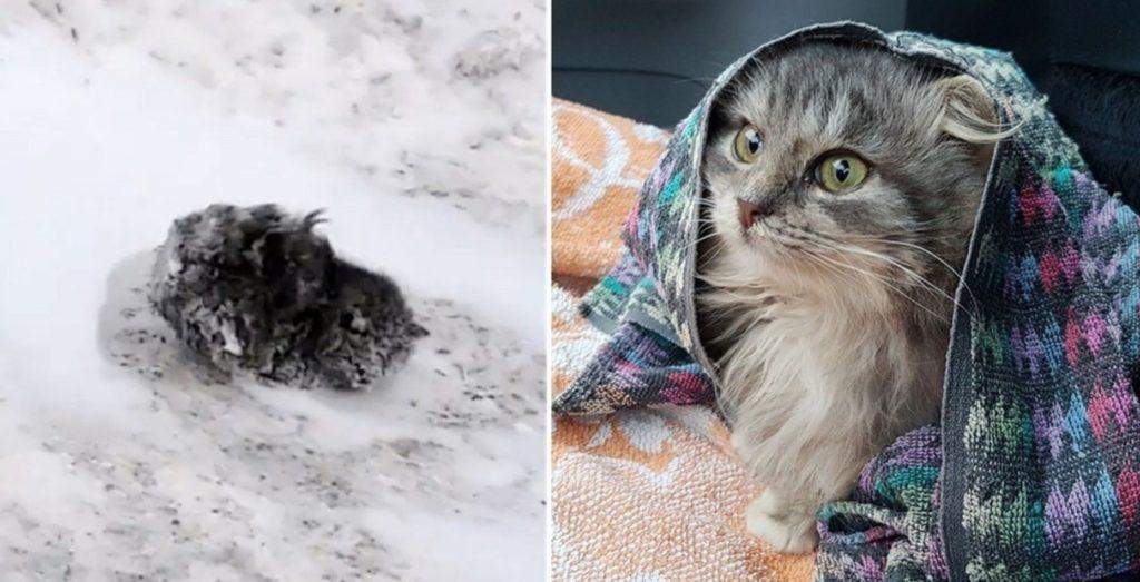 Маленькая кошечка замерзала в снегу, а люди проходили мимо, кто-то ее даже пнул..