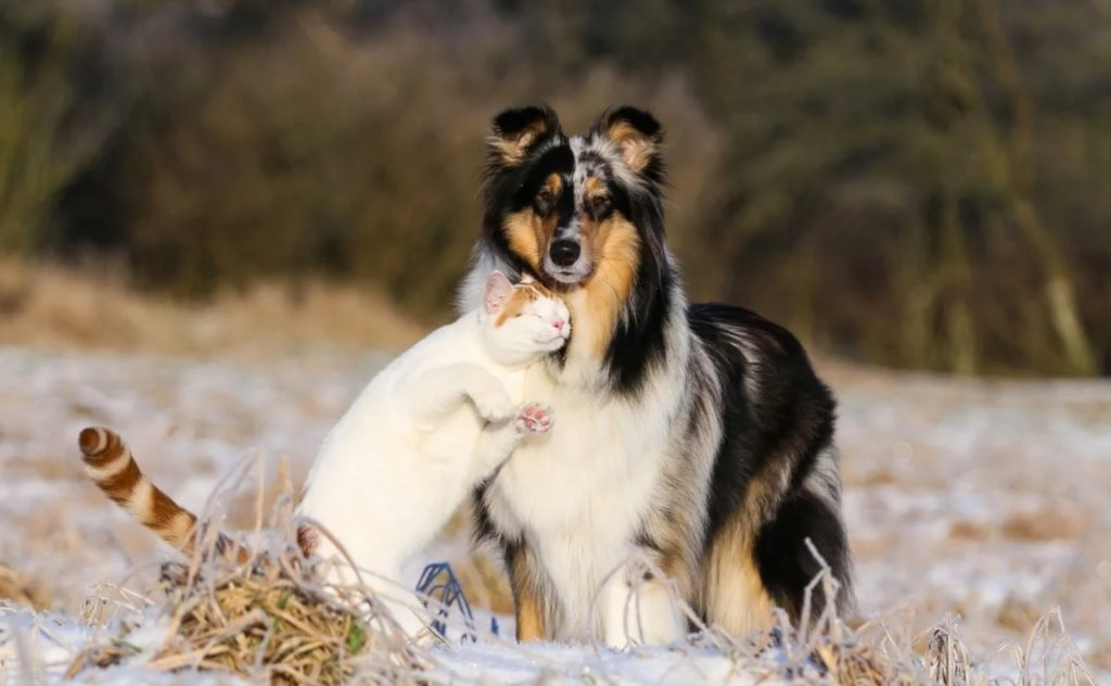 Кошка стала нежиться к собаке как к родной - животные были в одной шкуре и не давали друг другу замёрзнуть по ночам