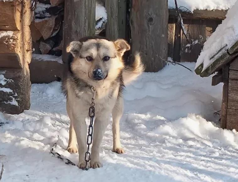 Игорь вернулся в деревню спустя 11 лет и обнаружил - что пес его ждал все это время