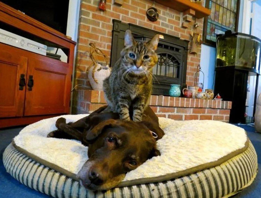 Кот делал массаж слабому псу - ему было его жалко, ведь бродячий образ жизни высосал из него все силы