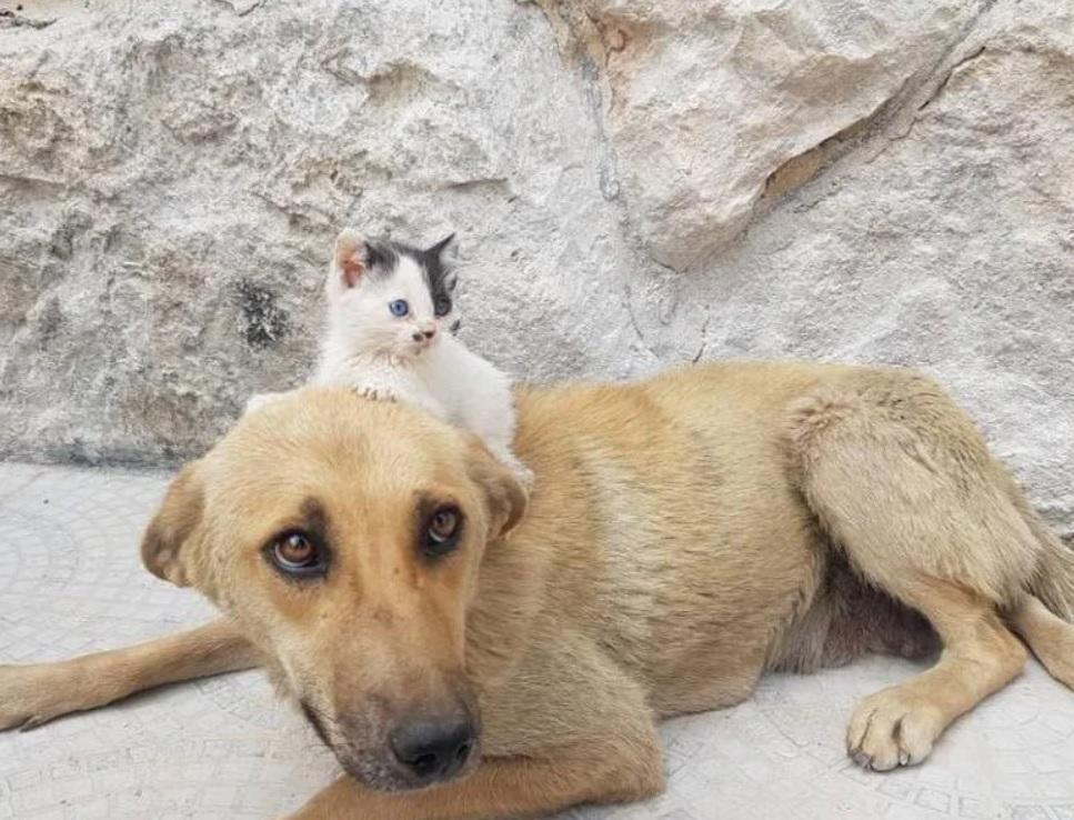 У собаки отобрали щенков и потеряв самое дорогое она не сдалась, а стала матерью для беззащитного котёнка