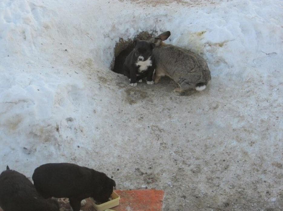 Заяц спас щенков у которых погибла мама собака