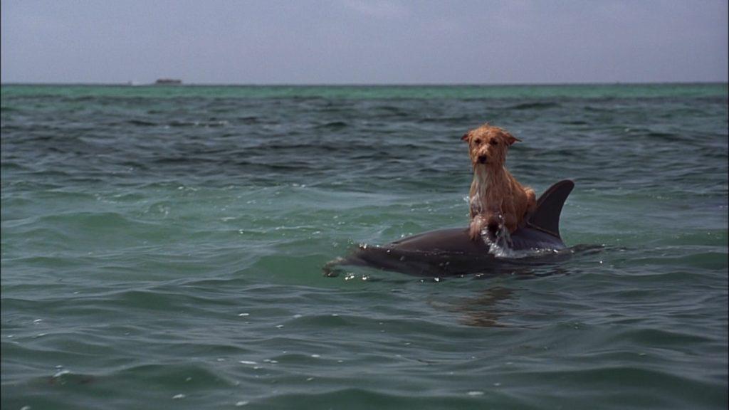 Дельфины оказывают помощь людям и животным ❤