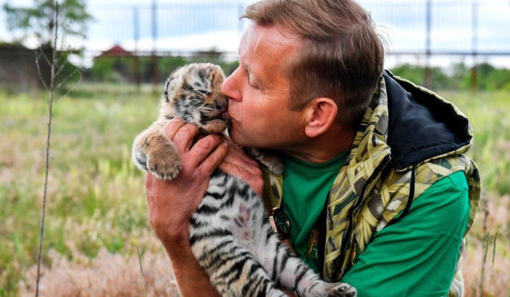 Тигрица чтобы спасти своего малыша - пришла к егерю за помощью