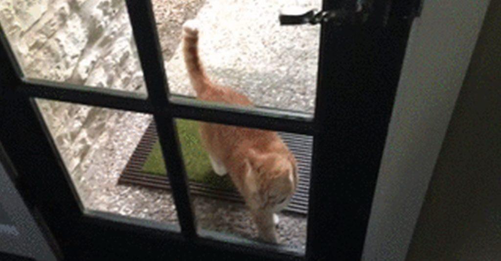 Находить дорогу домой является одним из феноменов котов
