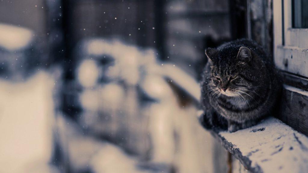 Дембель возвращался домой и увидел на автобусной остановке жалкого замёрзшего кота:  Домой они приехали уже вдвоём