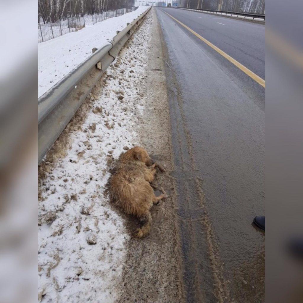 Добрые люди спасли замерзающую на трассе собаку