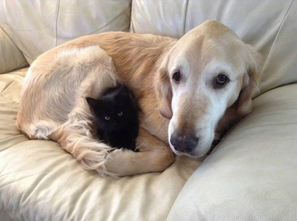 Котенок инвалид и собака стали лучшими друзьями