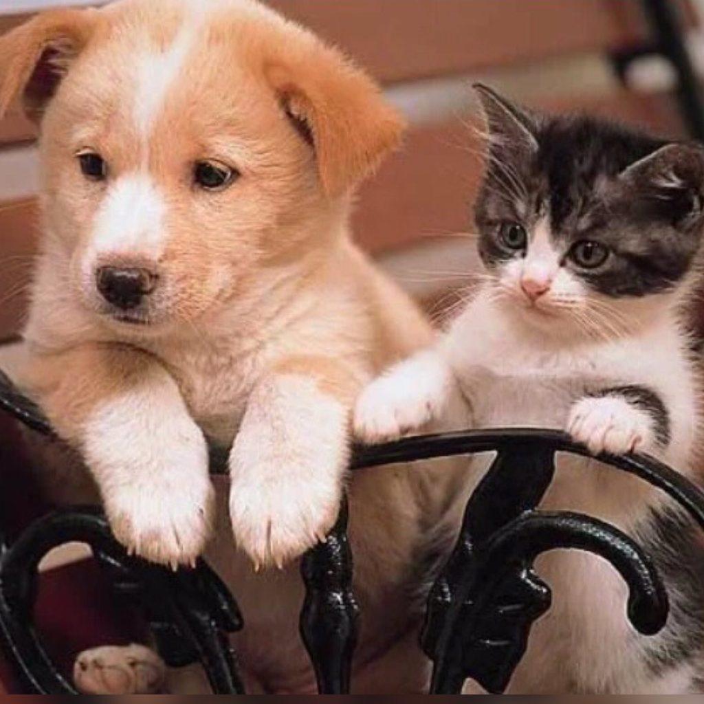 Котёнок и щенок так и не отведали бабушкиных домашних пирожков и плюшек - родители оставили их на скамейке