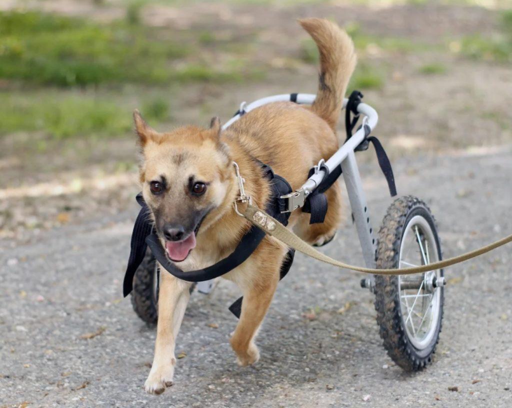Избитую собаку Лайму спасли волонтеры и вернули ей веру в человечность и доброту людей
