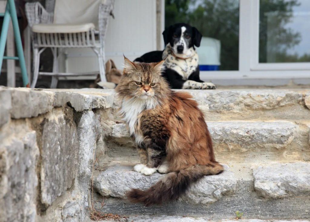 Сытый пёс скалился на бедную кошку - а она отвернулась, показав ободранную спинку