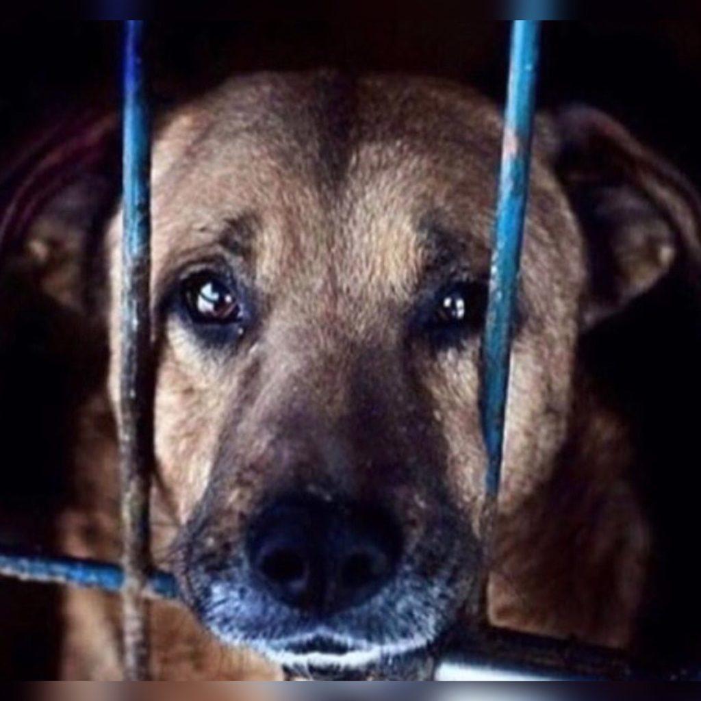 За ненужностью собаку сдали в приют - но случайный поворот событий сделал ее счастливой