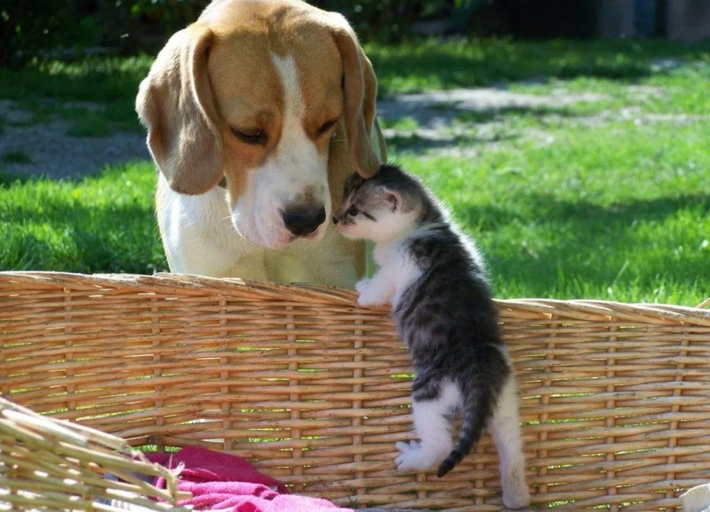 Пёс Лони носил еду беременной кошке - а потом стал папой для её малышей