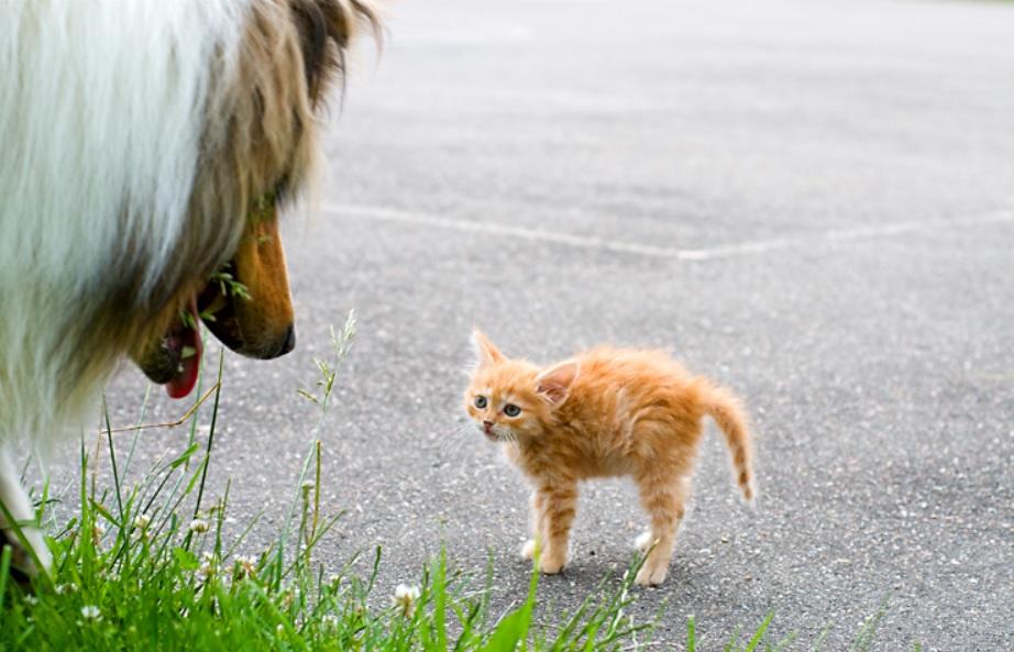 Пёс вышел на котёнка и  открыв пасть - приготовился взять добычу