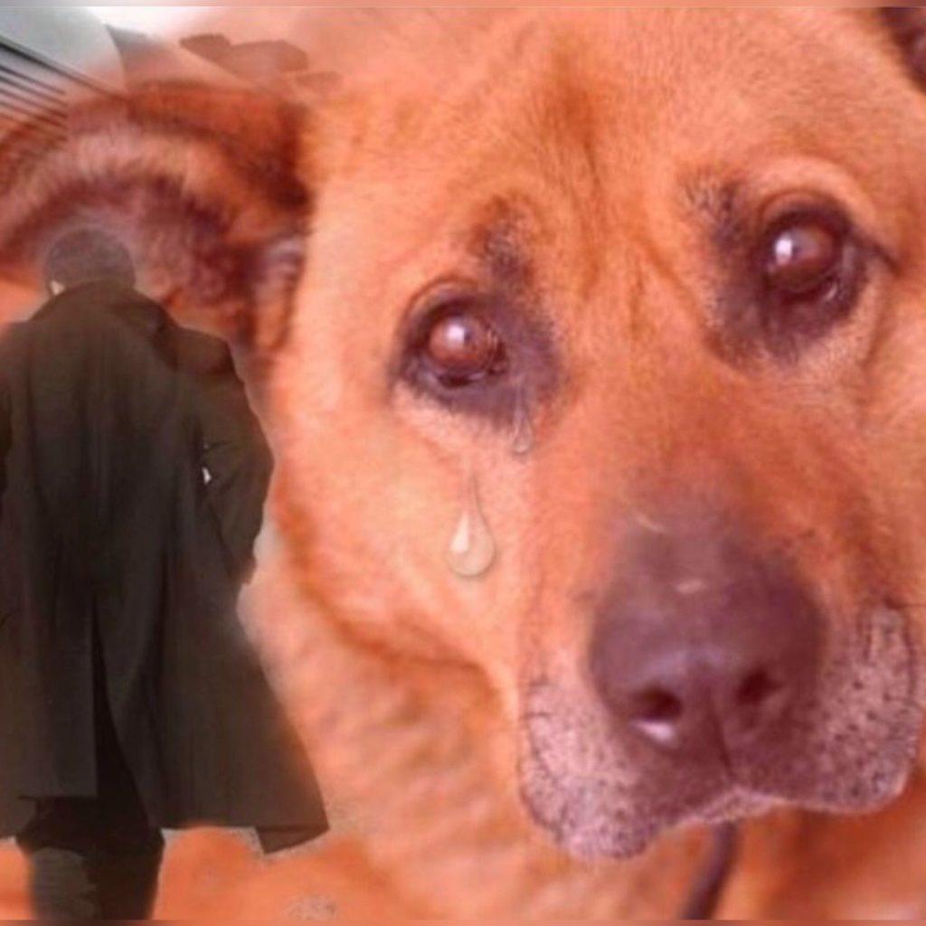 Собака возле трассы одиннадцать лет ждет своего хозяина