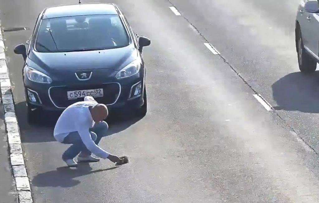 Пострадавший на трассе котенок - получил помощь и обрел семью и дом