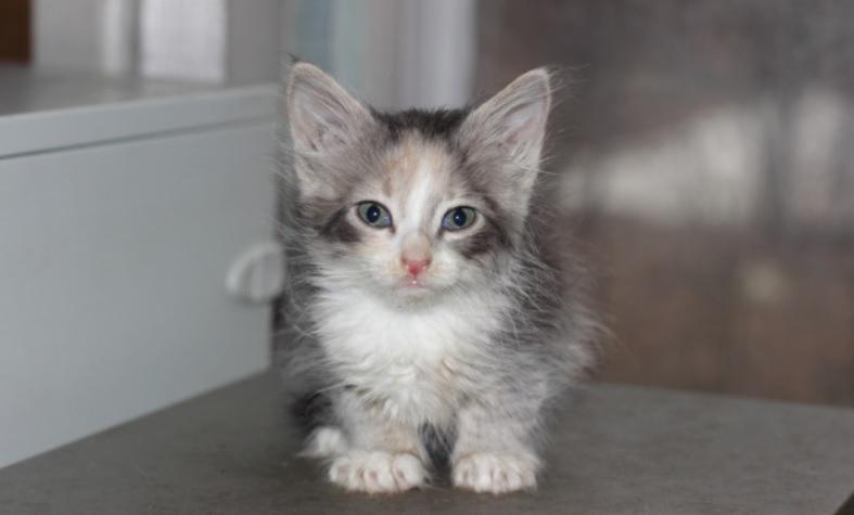 Котенок, дрожащий от холода и голода - просил у людей помощи