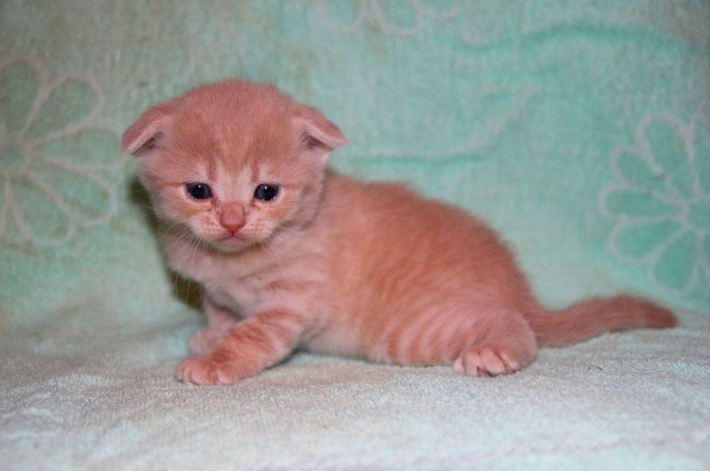 Маленького котенка выбросили в мусорник только потому - что он был не породистым