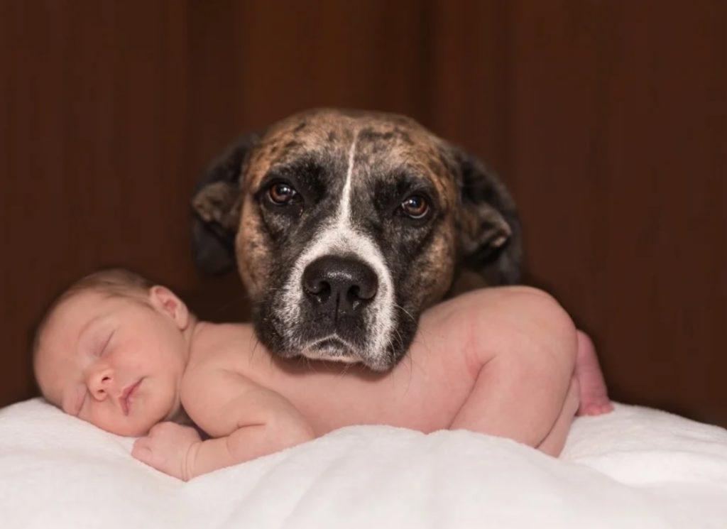 Соседский пёс приходил няньчить шумного младенца