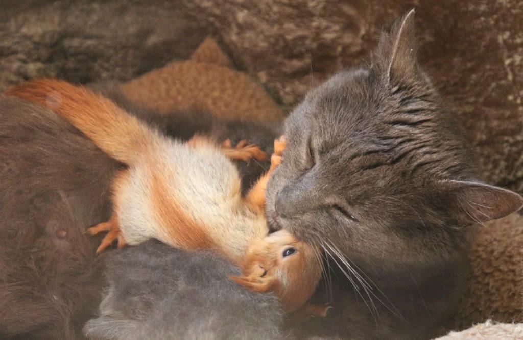 Кошка выкормила бельчат-сирот ❤
