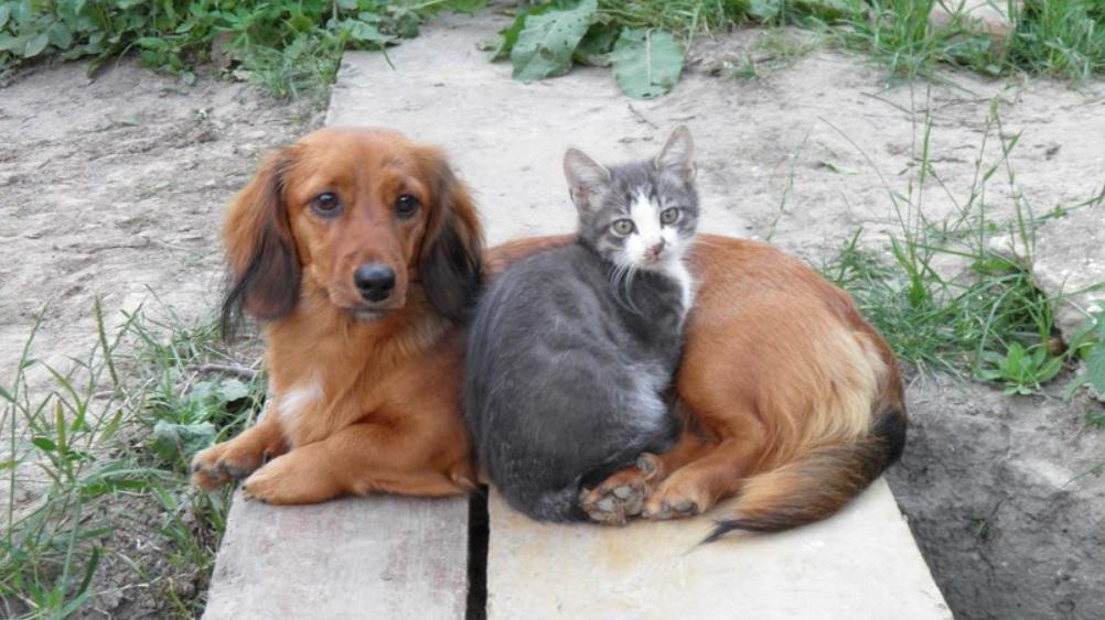 Собака выкормила котят у которых погибла мама