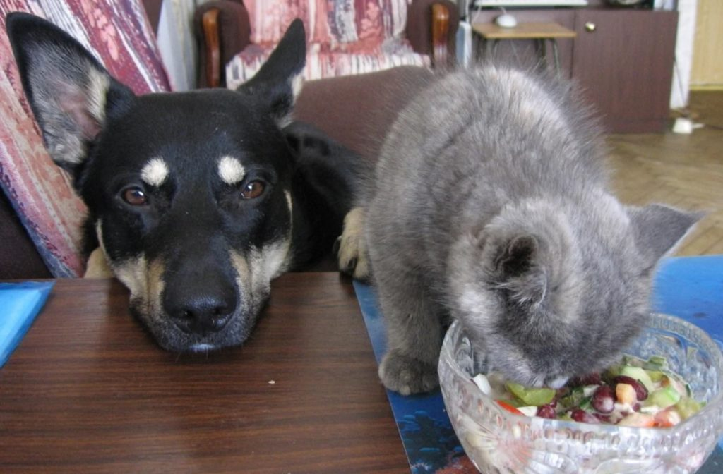 На Полину Петровну показывали пальцем - ведь она приводила в дом собаку и кошку: чтобы они доели приготовленные салаты