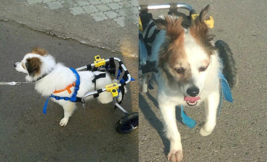 Жители поселка спасли пса инвалида  от гибели