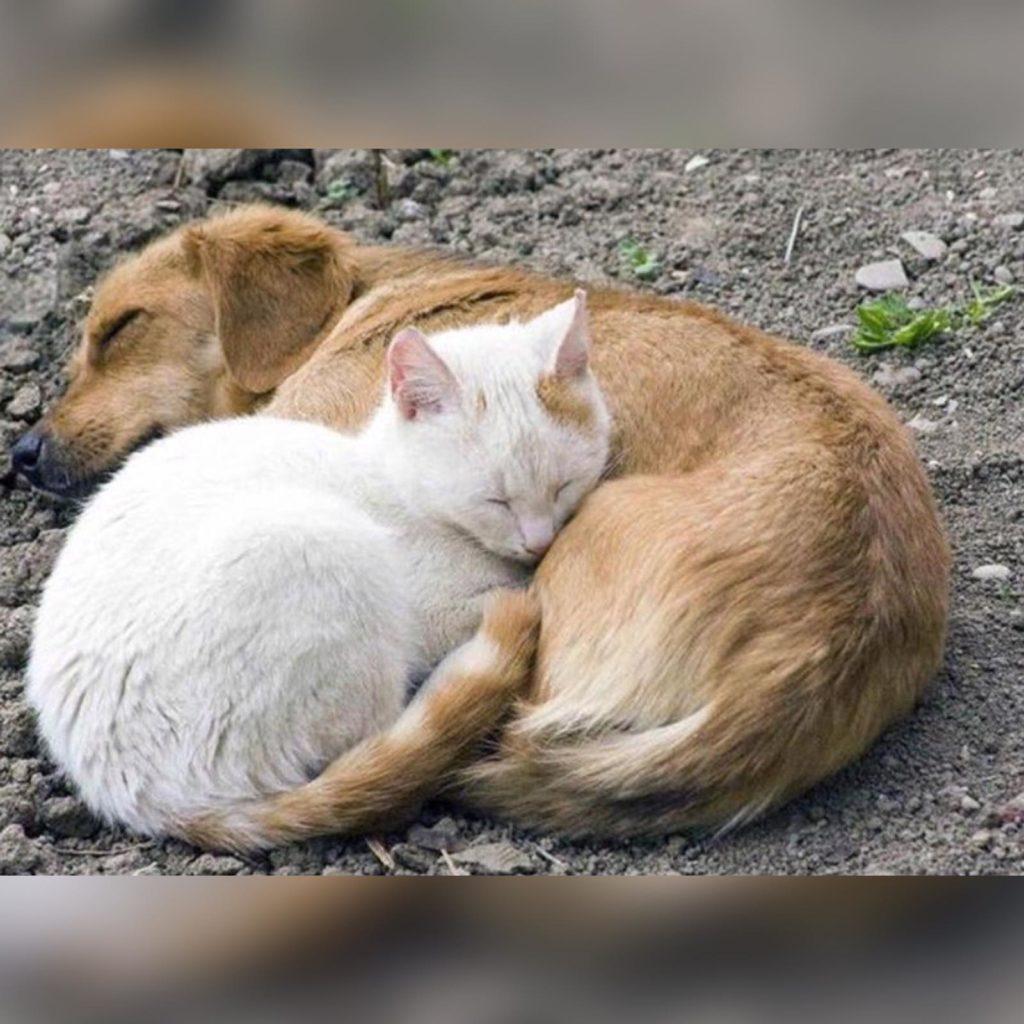 Неразлучным бездомным животным собаке и коту все же улыбнулась судьба