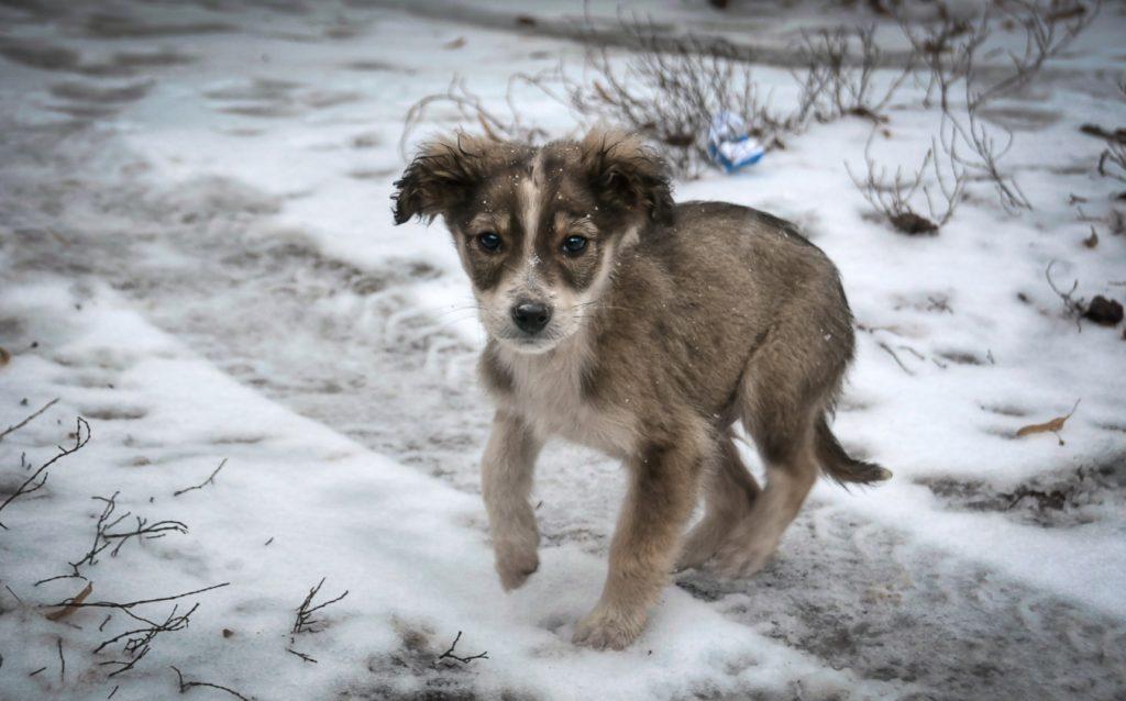 Парень в сквере подобрал бездомного щенка - который дрожал от холода