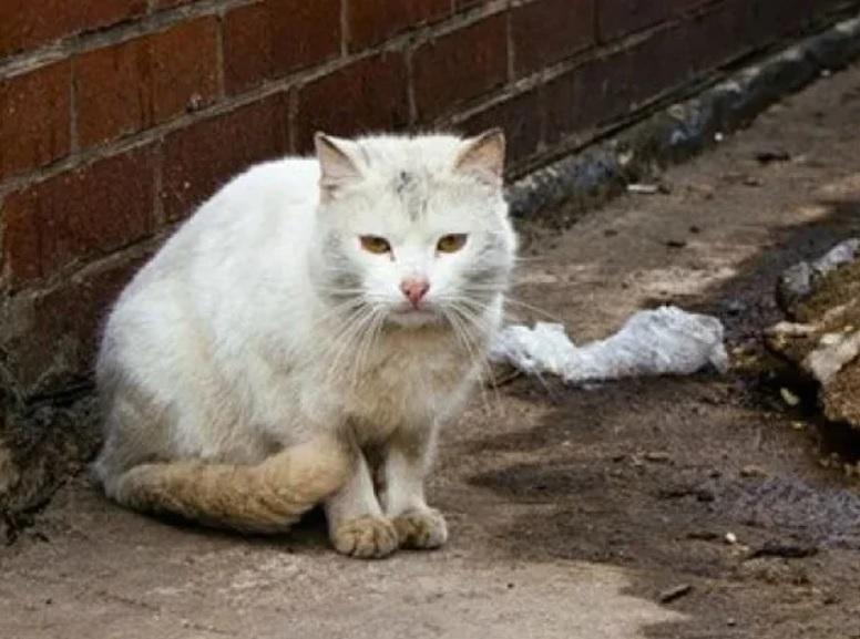 Три дня у подъезда кричал один и тот же кот: Попыталась подойти - а он стал убегать. Я была удивлена куда он меня привел