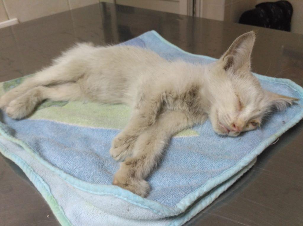 Молодая семья подобрала на улице больную кошечку и спасли ее от гибели