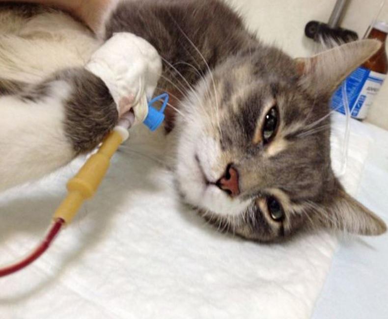 Маленькая кошечка нуждалась в помощи людей и она ее получила
